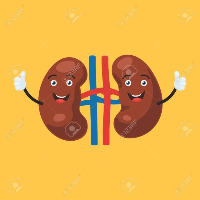 Happy kidney character