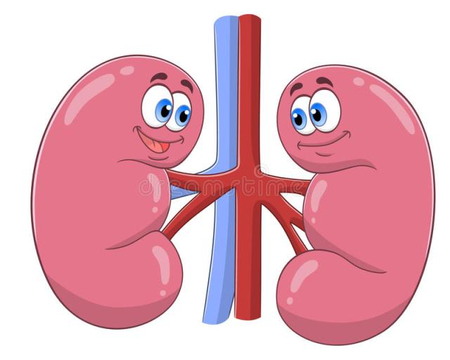 Kidney cartoon 3