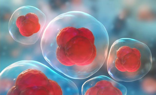Stem cell 8